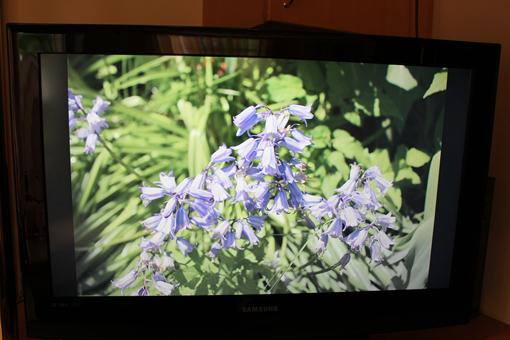 Ein Foto in Plex auf dem AppleTV